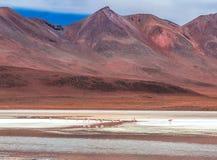 Τοπίο των φλαμίγκο στη λιμνοθάλασσα στο υπόβαθρο των βολιβιανών βουνών στοκ φωτογραφία