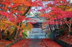 Τοπίο των φλογερών δέντρων σφενδάμνου στην είσοδο Sandou στην αίθουσα Bishamondo, ένας διάσημος βουδιστικός ναός Bishamon Στοκ Εικόνες
