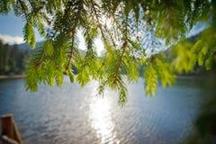 Τοπίο υποβάθρου θαμπάδων με μια λίμνη και ένας κλάδος πεύκων σε ηλιόλουστο Στοκ Εικόνες