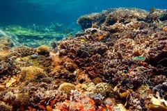τοπίο υποβρύχιο Στοκ Φωτογραφίες