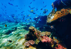 τοπίο υποβρύχιο Στοκ Φωτογραφία