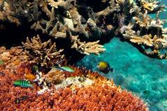 τοπίο υποβρύχιο Στοκ Εικόνα
