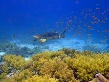 τοπίο υποβρύχιο Στοκ εικόνες με δικαίωμα ελεύθερης χρήσης