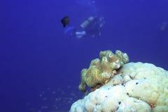 τοπίο υποβρύχιο Στοκ φωτογραφίες με δικαίωμα ελεύθερης χρήσης