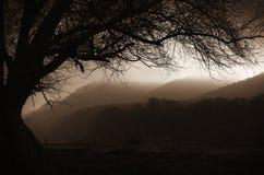 Τοπίο φαντασίας με το παλαιό δέντρο και ομίχλη μέσω των λόφων Στοκ φωτογραφία με δικαίωμα ελεύθερης χρήσης