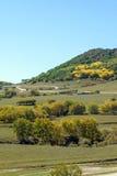 τοπίο φθινοπώρου βουνών πέντε χρώματος Στοκ Φωτογραφία
