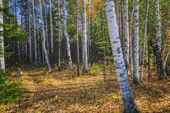 Τοπίο φθινοπώρου, δέντρα και φύλλα, ομιχλώδες δάσος στοκ φωτογραφίες