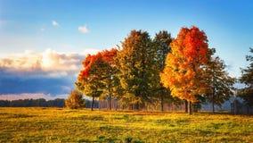 Τοπίο φθινοπώρου Ζωηρόχρωμα δέντρα στο πάρκο Σκηνή πτώσης το βράδυ Στοκ Φωτογραφία