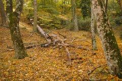 Τοπίο φθινοπώρου ζωηρόχρωμο δάσος φθινοπώρ& Στοκ φωτογραφία με δικαίωμα ελεύθερης χρήσης