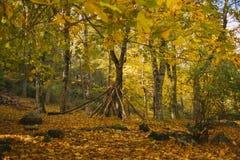 Τοπίο φθινοπώρου ζωηρόχρωμο δάσος φθινοπώρ& Στοκ Εικόνες
