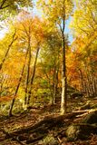 Τοπίο φθινοπώρου με έναν βράχο Στοκ Εικόνες