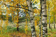 Τοπίο φθινοπώρου με διάφορα δέντρα Στοκ Εικόνες