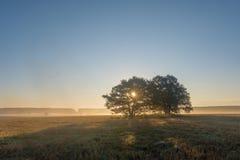 Τοπίο φθινοπώρου με μια άποψη των μεγάλων δέντρων στην ομίχλη Στοκ Εικόνες