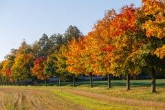 Τοπίο φθινοπώρου με τα χρυσά δέντρα φθινοπώρου Στοκ φωτογραφία με δικαίωμα ελεύθερης χρήσης