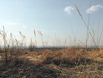 Τοπίο φθινοπώρου με την κίτρινη χλόη μια ημέρα στοκ φωτογραφία με δικαίωμα ελεύθερης χρήσης