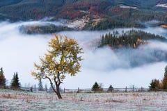 Τοπίο φθινοπώρου με την υδρονέφωση πρωινού στα βουνά στοκ φωτογραφία με δικαίωμα ελεύθερης χρήσης