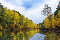 Τοπίο φθινοπώρου με τις κίτρινες σημύδες στον ποταμό Στοκ Εικόνες