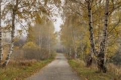 Τοπίο φθινοπώρου με τις σημύδες κατά μήκος του τρόπου, Vitosha βουνό, Βουλγαρία Στοκ φωτογραφίες με δικαίωμα ελεύθερης χρήσης