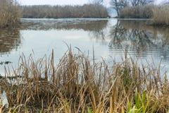 Τοπίο φθινοπώρου Με τις όχθεις καλάμων του ποταμού Dnieper, περιοχή Zaporizhia, της Ουκρανίας στοκ φωτογραφία