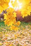 Τοπίο φθινοπώρου με τον ήλιο που λάμπει μέσω του κίτρινου φυλλώματος Στοκ φωτογραφία με δικαίωμα ελεύθερης χρήσης