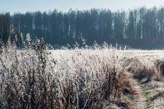 Τοπίο φθινοπώρου με τον παγετό στοκ εικόνα με δικαίωμα ελεύθερης χρήσης