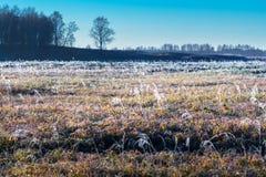 Τοπίο φθινοπώρου με τον παγετό στοκ εικόνες