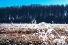 Τοπίο φθινοπώρου με τον παγετό στοκ φωτογραφία με δικαίωμα ελεύθερης χρήσης