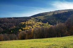 Τοπίο φθινοπώρου με το δέντρο χρώματος Στοκ Εικόνες