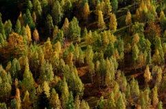 Τοπίο φθινοπώρου με το ζωηρόχρωμο δάσος Στοκ Εικόνες