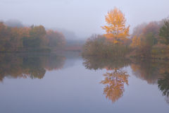 Τοπίο φθινοπώρου με το κίτρινο δέντρο Στοκ Εικόνα