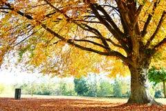 Τοπίο φθινοπώρου με το μεγάλο δέντρο στο πάρκο Στοκ Φωτογραφία