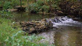 Τοπίο φθινοπώρου με το ρέοντας ποταμό και τα φύλλα απόθεμα βίντεο