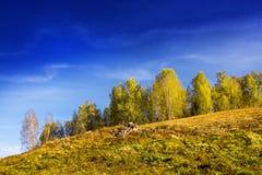 Τοπίο φθινοπώρου με το δύσκολο ανάχωμα στοκ φωτογραφίες