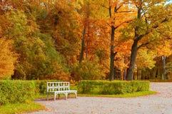 Τοπίο φθινοπώρου Ξύλινος πάγκος στο πάρκο φθινοπώρου κάτω από τα κιτρινισμένα δέντρα φθινοπώρου Στοκ Εικόνες