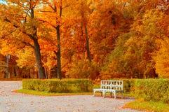 Τοπίο φθινοπώρου Ξύλινος πάγκος στο πάρκο φθινοπώρου κάτω από τα κιτρινισμένα δέντρα φθινοπώρου Στοκ φωτογραφίες με δικαίωμα ελεύθερης χρήσης