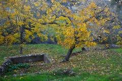 Τοπίο φθινοπώρου Ξύλα καρυδιάς Στοκ εικόνες με δικαίωμα ελεύθερης χρήσης