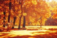 Τοπίο φθινοπώρου, πάρκο φθινοπώρου μέσα με τα χρυσά δέντρα φθινοπώρου στον ηλιόλουστο καιρό Στοκ φωτογραφία με δικαίωμα ελεύθερης χρήσης