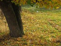 Τοπίο φθινοπώρου, πάρκο φθινοπώρου μέσα με τα χρυσά δέντρα φθινοπώρου στον ηλιόλουστο καιρό Στοκ Εικόνες