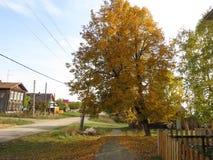 Τοπίο φθινοπώρου, πάρκο φθινοπώρου μέσα με τα χρυσά δέντρα φθινοπώρου στον ηλιόλουστο καιρό Στοκ Εικόνα