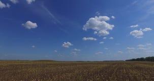 Τοπίο φθινοπώρου Πέταγμα επάνω από τον ξηρό τομέα ηλίανθων Ειδυλλιακός ουρανός, συμπαθητική εικόνα φιλμ μικρού μήκους