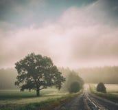 Τοπίο φθινοπώρου δρόμος ομίχλης Σκιαγραφίες δέντρων Στοκ Εικόνα