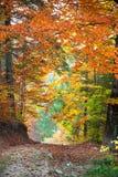 Τοπίο φθινοπώρου, σήραγγα από τη ζωηρόχρωμη ανάπτυξη δέντρων και footpat Στοκ Εικόνα