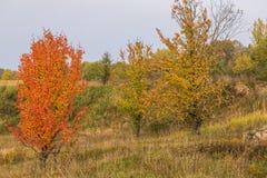 Τοπίο φθινοπώρου στα φωτεινά χρώματα Στοκ Εικόνα