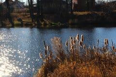 Τοπίο φθινοπώρου στη λίμνη Στοκ Εικόνα