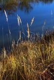 Τοπίο φθινοπώρου στη λίμνη Στοκ Εικόνες