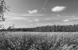 Τοπίο φθινοπώρου στη δασώδη περιοχή Στοκ Φωτογραφία