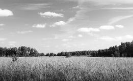 Τοπίο φθινοπώρου στη δασώδη περιοχή Στοκ φωτογραφίες με δικαίωμα ελεύθερης χρήσης