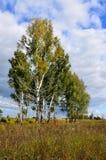 Τοπίο φθινοπώρου στη Σιβηρία στοκ εικόνα με δικαίωμα ελεύθερης χρήσης