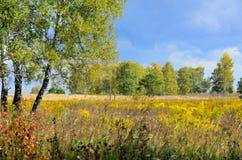 Τοπίο φθινοπώρου στη Σιβηρία στοκ φωτογραφία