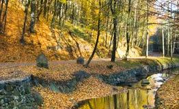 Τοπίο φθινοπώρου στο δάσος Στοκ Εικόνα